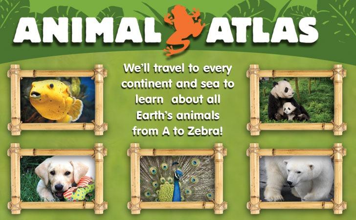 Animal Abcs And Animal 123s On Dvd Grinning Cheek To Cheek