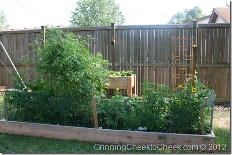 Garden in Backyard