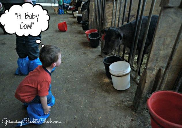 Dairy Farm Tour 8