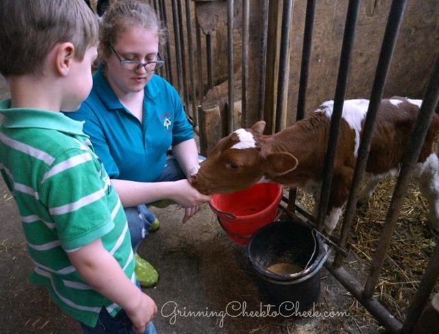 Dairy Farm Tour 9