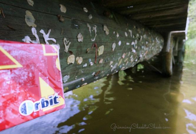 Gum Under Bridge