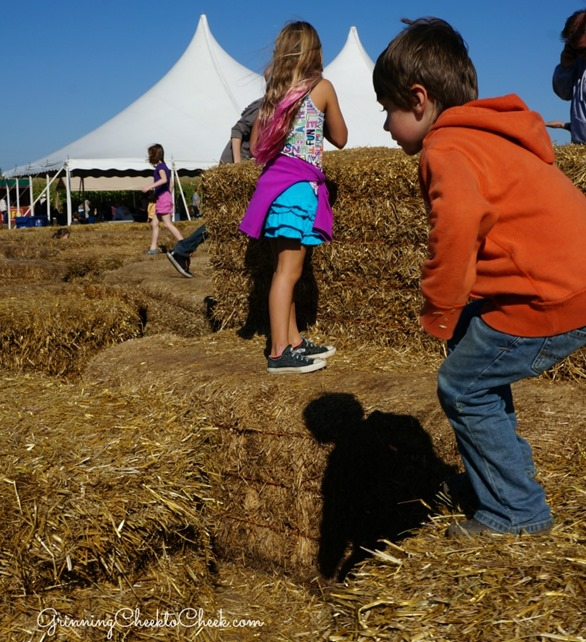 hay maze minneapolis